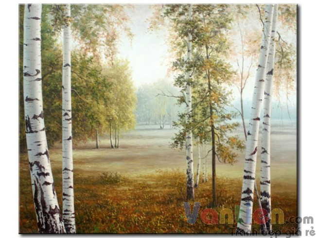 Hàng Cây Trong Rừng M1160