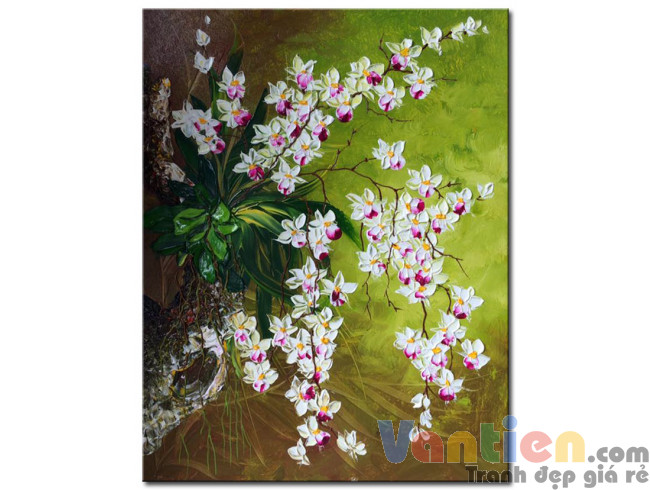 Hoa Lan Trắng M2129