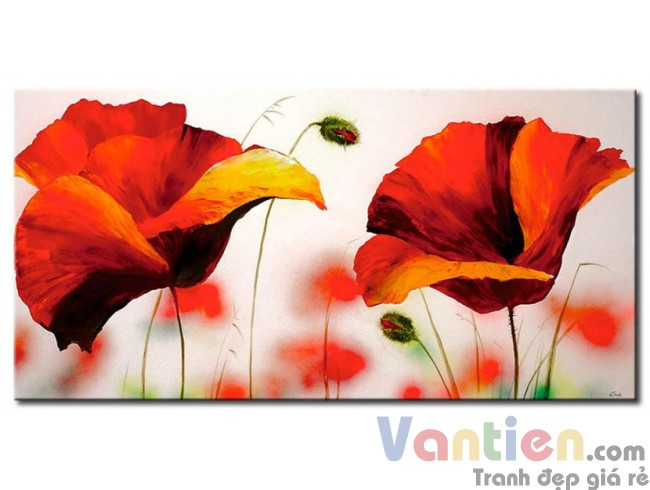 Những Cánh Hoa Poppy Khoe Sắc M0793