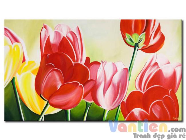 Tulip Khoe Sắc M1195