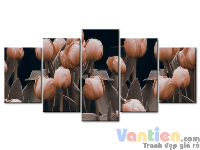 Tulip Khoe Sắc M1202