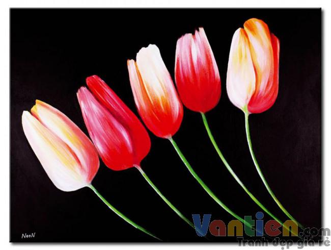 Tulip Khoe Sắc M1228