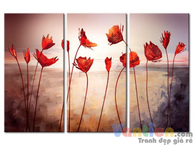 Những Cánh Hoa Poppy Khoe Sắc M0771