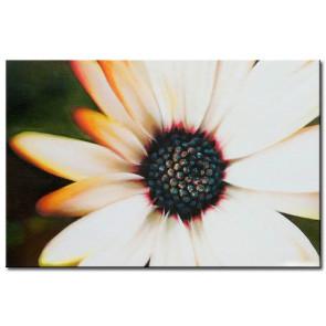 Những Cánh Hoa Khoe Sắc M2088