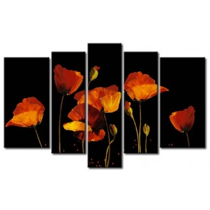 Những Cánh Hoa Poppy Khoe Sắc M0780