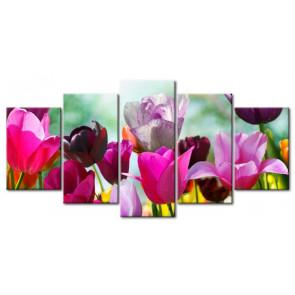Sắc Hoa Tulip M1207