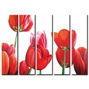 Sắc Màu Tulip M1203