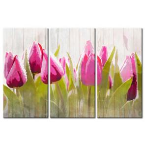 Tulip Khoe Sắc M1205