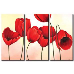 Tulip Khoe Sắc M1212