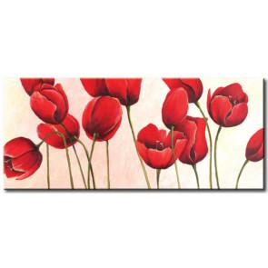 Tulip Khoe Sắc M1213