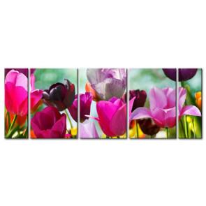 Tulip Khoe Sắc M1215