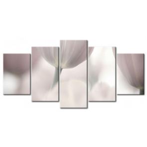 Tulip Khoe Sắc M1216
