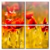 Poppy Khoe Sắc M0956