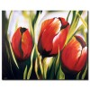 Sắc Hoa Tulip M1184