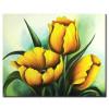 Tulip Khoe Sắc M1229