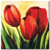 Tulip Khoe Sắc M1230